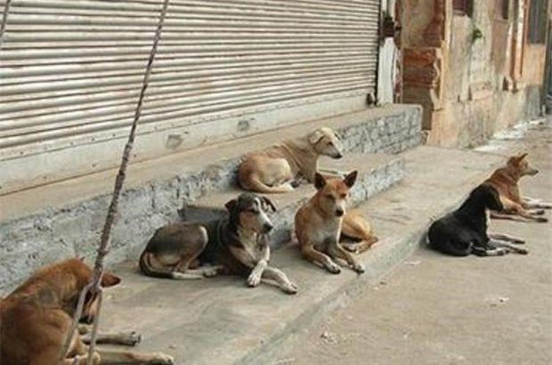 سگ های بی صاحب تهران ساماندهی می شوند