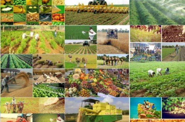 ارزآوری ۶.۴ میلیارد دلاری صادرات محصولات کشاورزی