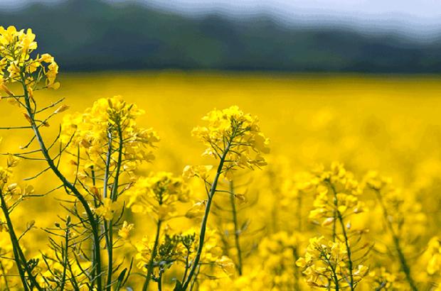 هیچ کشوری به واردات دانههای روغنی یارانه نمیدهد