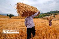 ۹۰ درصد پول کشاورزان تسویه شد