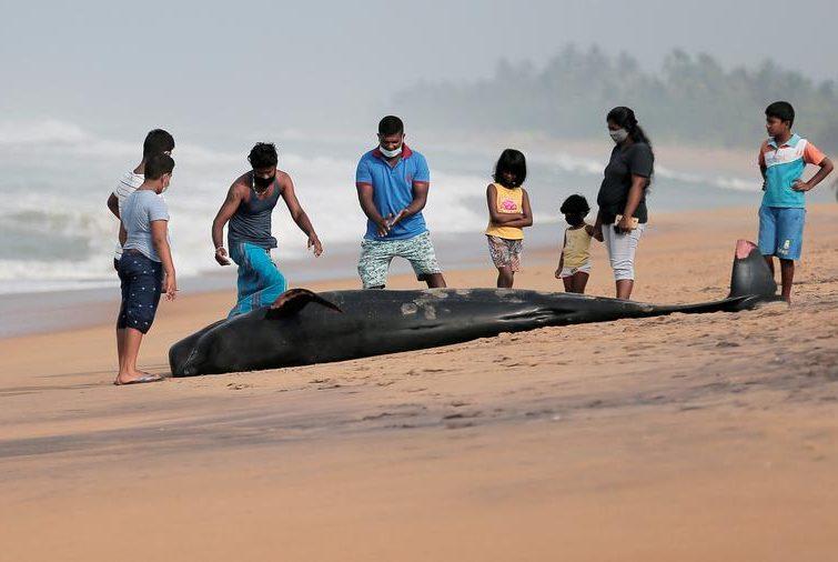 وال مرده در ساحل سریلانکا/ رویترز