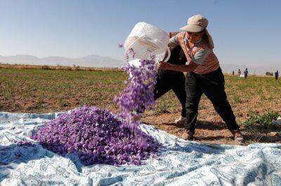 افزایش عرضه زعفران تقلبی در بازار